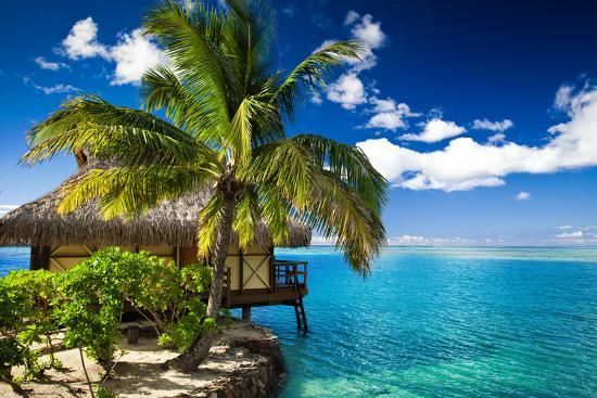 martin-valigursky-tropical-bungalow-and-palm-tree-next-to-amazing-blue-lagoon
