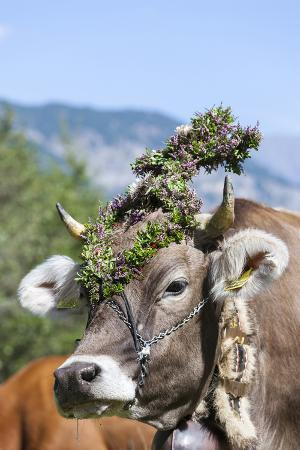 martin-zwick-cow-decorated-with-flowers-and-ceremonial-bells-south-tyrol-italy