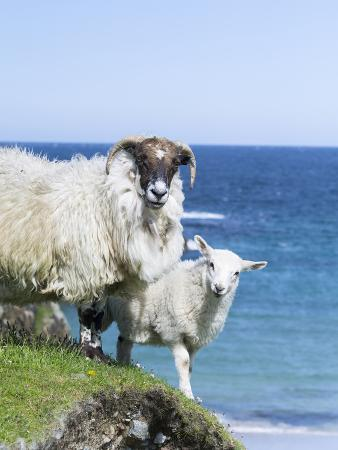 martin-zwick-scottish-blackface-on-the-isle-of-harris-scotland