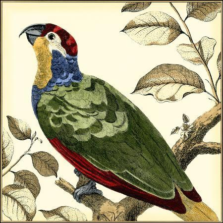 martinet-tropical-parrot-ii