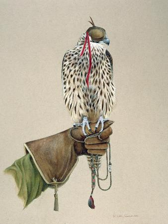 mary-clare-critchley-salmonson-saker-on-a-falconer-s-wrist-1981