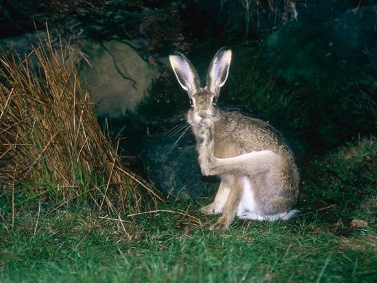 mary-plage-brown-hare-grooming-uk