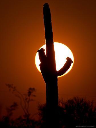 matt-york-saguaro-cactus-sunset-picacho-peak-arizona
