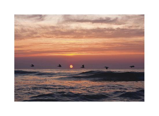 matthew-lusk-pelican-sunrise