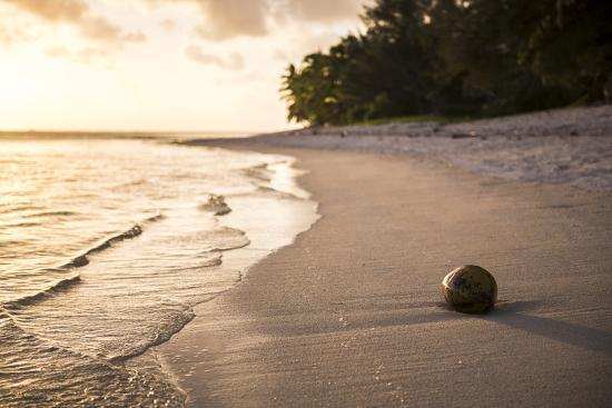 matthew-williams-ellis-coconut-on-a-tropical-beach-at-sunset-rarotonga-island-cook-islands-south-pacific-pacific