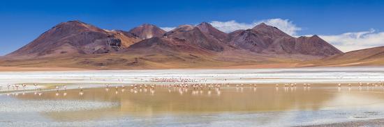 matthew-williams-ellis-flamingos-at-laguna-hedionda-a-salt-lake-area-in-the-altiplano-of-bolivia-south-america