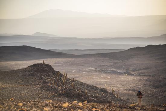 matthew-williams-ellis-trekking-at-sunset-in-cactus-valley-los-cardones-ravine-atacama-desert-north-chile