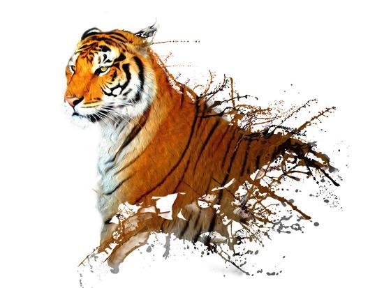 mattiamarty-tiger-splash