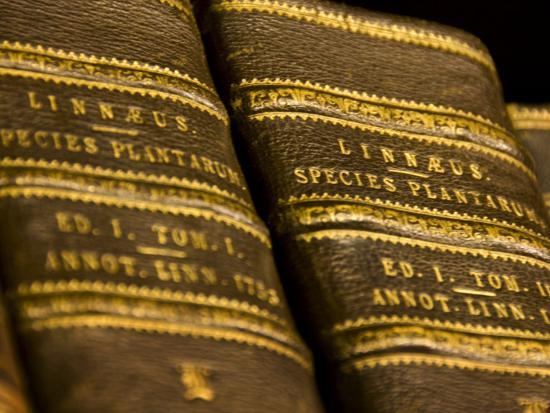 mattias-klum-books-in-the-library-of-carl-linnaeus