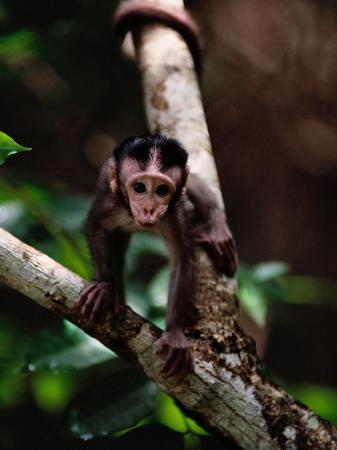 mattias-klum-close-view-of-a-baby-macaque