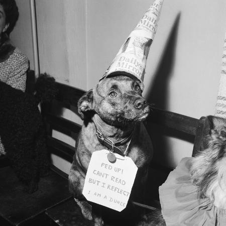 maurice-tibbles-sally-the-dog-at-annual-dogs-christmas-party-in-bristol-1958