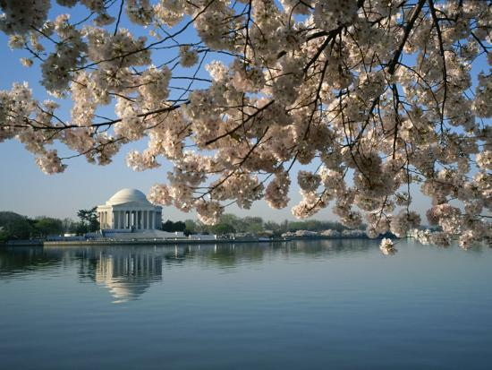 medford-taylor-view-of-cherry-blossoms-and-lincoln-memorial-at-the-tidal-basin