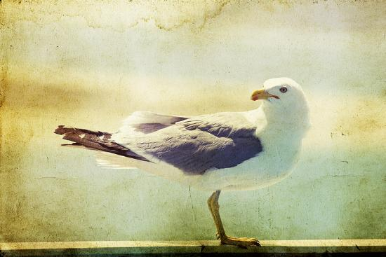 melis-vintage-photo-of-a-seagull-artistic-retro-styled-picture