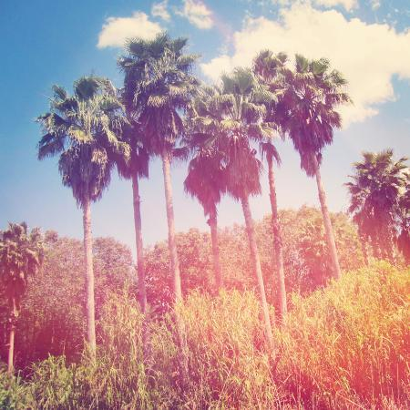 melking-palm-trees