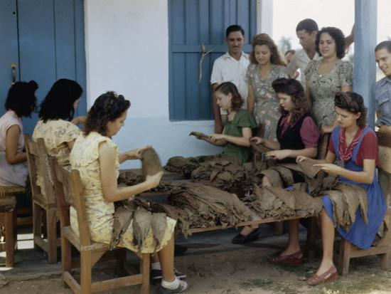 melville-grosvenor-women-inspect-tobacco-leaves-and-select-the-best-for-wrapping-cigars