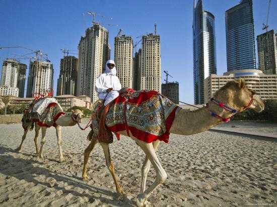merten-snijders-camels-on-beach-with-high-rises-in-background