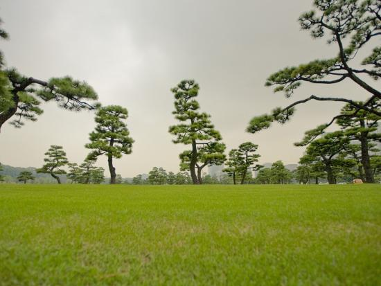 merten-snijders-kokyo-gaien-imperial-palace-gardens-park-covered-with-pine-trees
