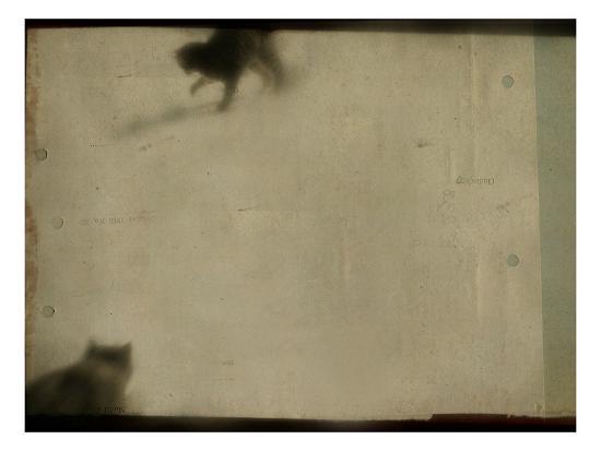 mia-friedrich-blurred-cats