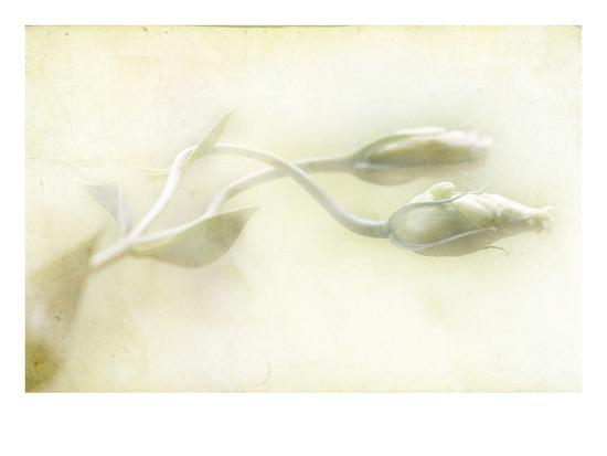 mia-friedrich-study-of-entwined-white-flowers