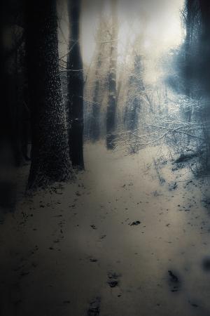 mia-friedrich-woodland-in-winter