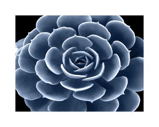 mia-jensen-succulent-indigo-iv