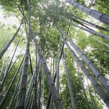 micha-pawlitzki-bamboo-forest