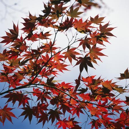micha-pawlitzki-colorful-leaves