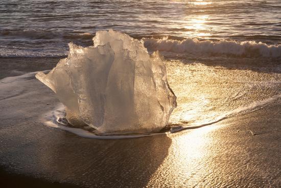 michael-blanchette-photography-ice-tulip