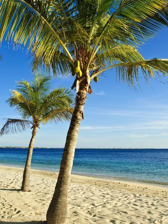 michael-defreitas-beach-bonaire-netherlands-antilles-west-indies-caribbean-central-america