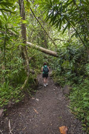 michael-defreitas-hiking-manoa-falls-trail-honolulu-oahu-hawaii-united-states-of-america-pacific