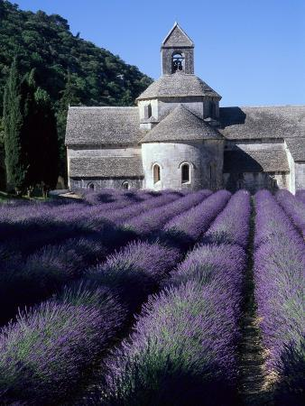 michael-freeman-abbey-and-lavender-fields