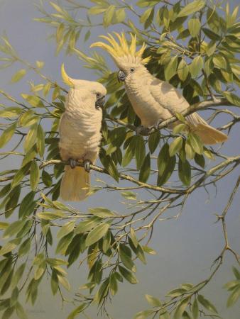 michael-jackson-cockatoos