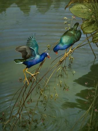 michael-jackson-the-mating-game