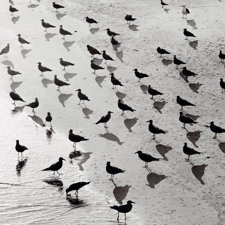 michael-kahn-escher-s-seagulls