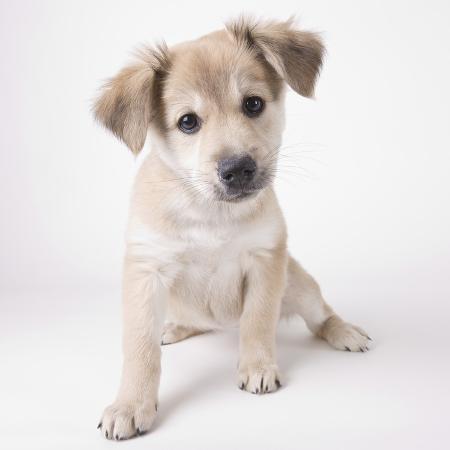 michael-kloth-cute-puppy