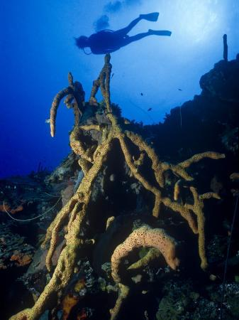 michael-lawrence-diver-silhouette-over-reef-with-large-stand-of-scattered-pore-rope-sponge