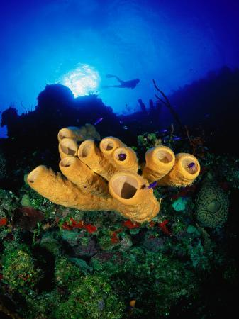 michael-lawrence-yellow-tube-and-red-sponges-in-little-cayman-bloody-bay-wall-west-end-point-cayman-islands