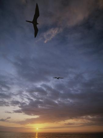 michael-melford-birds-float-on-the-breeze-over-the-water-at-sunset