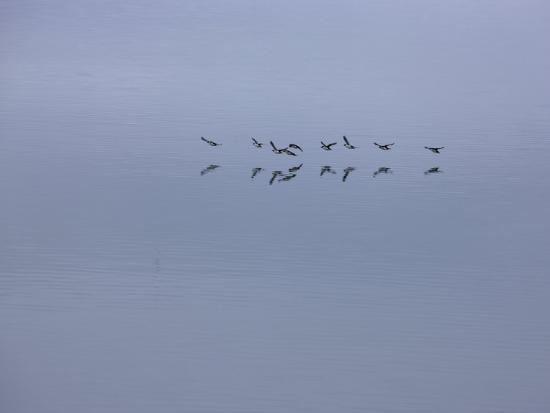 michael-melford-flying-birds-and-reflections
