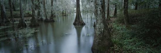 michael-melford-mangrove-swamp