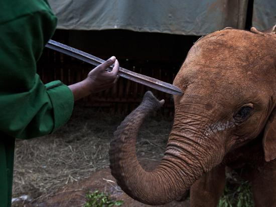 michael-nichols-a-keeper-indicates-the-depth-to-which-this-spear-penetrated-the-head-of-an-elephant