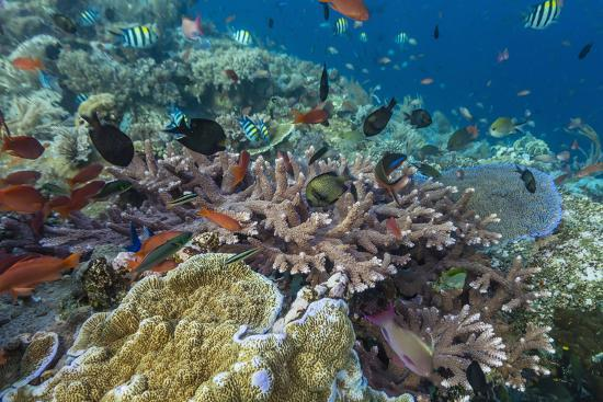 michael-nolan-a-profusion-of-coral-and-reef-fish-on-batu-bolong-komodo-island-national-park-indonesia