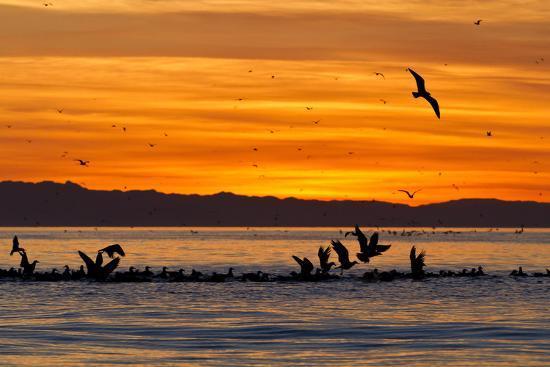 michael-nolan-sunrise-isla-rasa-gulf-of-california-sea-of-cortez-baja-california-mexico-north-america