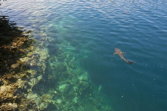 michael-runkel-black-tipped-sharks-in-the-crystal-clear-waters-of-the-marovo-lagoon-solomon-islands-pacific
