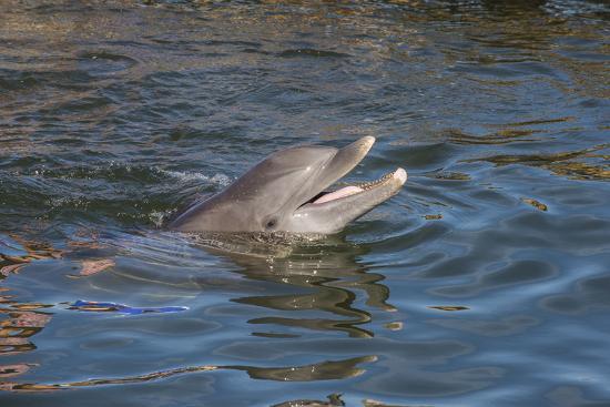 michael-runkel-bottlenose-dolphin-tursiops-tursiops-grassy-key-florida-united-states-of-america-north-america