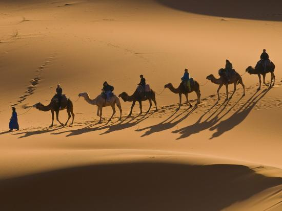 michael-runkel-camels-in-the-dunes-merzouga-morocco-north-africa-africa