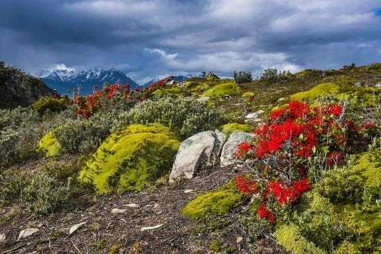 michael-runkel-colourful-moss-on-an-island-in-the-beagle-channel