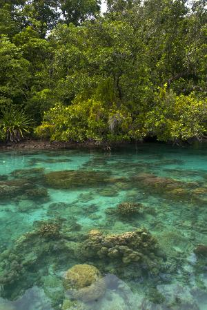 michael-runkel-giant-clams-in-the-clear-waters-of-the-marovo-lagoon-solomon-islands-pacific