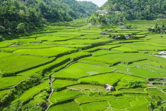 michael-runkel-hapao-rice-terraces-banaue-unesco-world-heritage-site-luzon-philippines-southeast-asia-asia