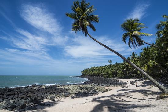 michael-runkel-palm-tree-on-a-white-sand-beach-on-saint-joseph-island-french-guiana-department-of-france